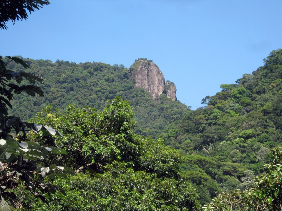 TIJUCA FOREST – AN URBAN FOREST IN THE HEART OF RIO!