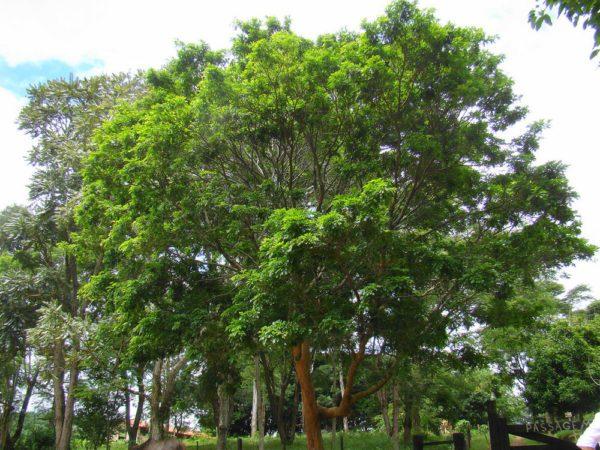 jardín-botanico-rio-de-janeiro-palo-brasil