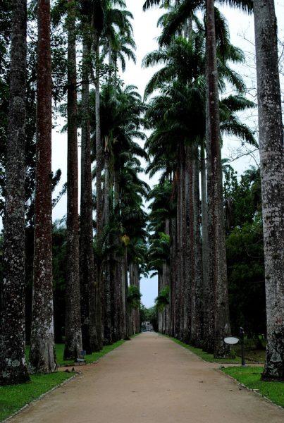 jardim-botanico-rio-de-janeiro-palmeiras