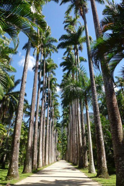 que-hacer-en-Río-en-3-dias-jardín-botánico