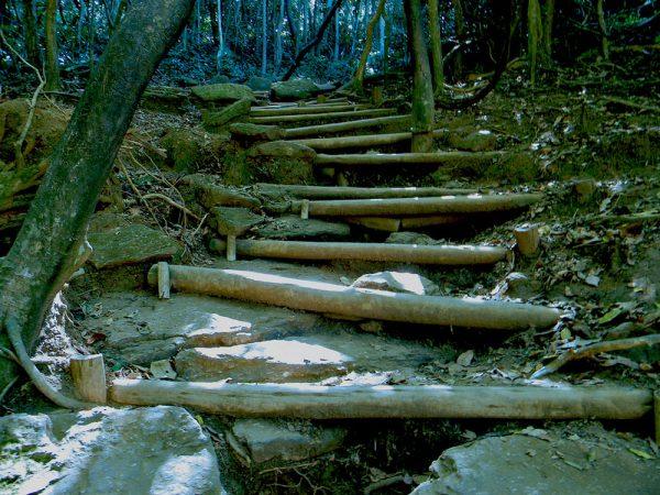trilha-da-urca-rio-de-janeiro-tours